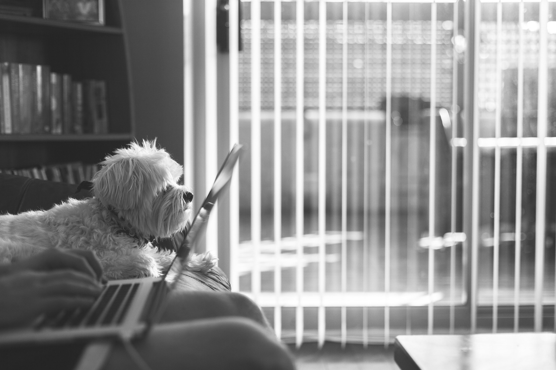 How to (Not) Work Like a Dog!